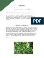 Proyecto Del Cultivo de Marihuana