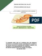 ecundacion-131027214221-phpapp