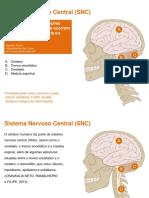 Cérebro trino ou triúnico