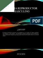 SISTEMA REPRODUCTOR MASCULINO (2) (1)