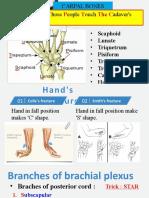 medical mnemonics.pptx