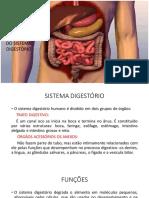 ANATOMIA DO SISTEMA DIGESTÓRIO   NOITE
