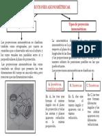 MAPA 1.0 PROYECCIONES..pdf