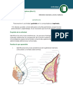 ACTIVIDAD LACTANCIA MATERNA.pdf