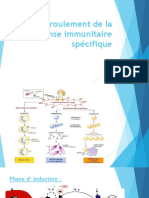 Déroulement de la réponse immunitaire spécifique-converti
