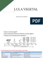 FISIOLOGÍA VEGETAL-3clase.pptx