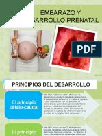 EMBARAZO Y DESARROLLO PRENATAL.pptx