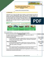 Guia de actividades 1er.año.docx