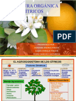 AGRICULTURA ORGANICA EN CÍTRICOS