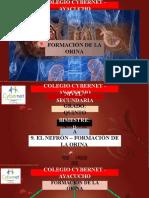 9. EL NEFRÓN - FORMACIÓN DE LA ORINA.pptx