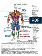 Программа упражнений на тренажере TRX.pdf