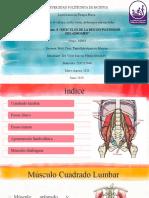 musculos region posterior del abdomen.pptx