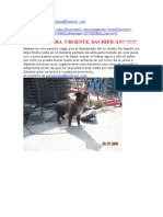 Adopciones urgentes Almería