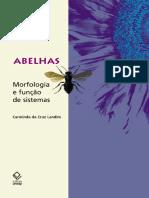 Abelhas -Morfologia e Função de Sistemas