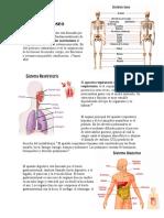 El sistema óseo.docx
