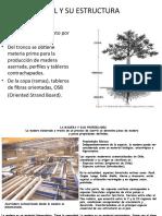 EL ÁRBOL Y SU ESTRUCTURA-1.ppt