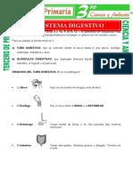 El-Sistema-Digestivo-Humano-para-Tercero-de-Primaria