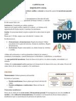 Esqueleto Axial-Embriologia.pdf