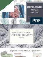 Embriologia Del Sistema Digestivo