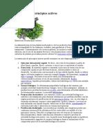 Extraccion de principios activos de plantas medicinales