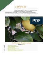 Culture du citronnier.docx