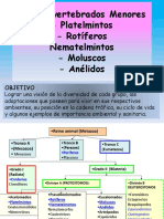 TP7-inverterbrados menores (1)