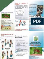 triptico dengue.docx