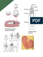 Biologie-Végétale-Résumé-04.pdf