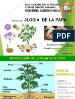 MORFOLOGÍA DE LA PAPA