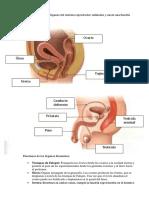 Práctica #1 (ejercicio 1).pdf