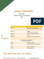 7. Enzimas .pptx