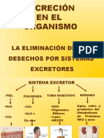 ppt sistema excretor