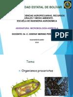 Organismos procariotas.