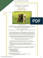 Genética del color del perro labrador retriever _ Labradores de Abantueso