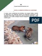 protocolo-atencion-felinos