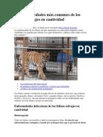 Enfermedades más comunes de los felinos salvajes en cautividad.pdf
