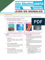 Circulación-en-Animales-para-Segundo-Grado-de-Secundaria