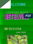 Betel Vine  Cultivation