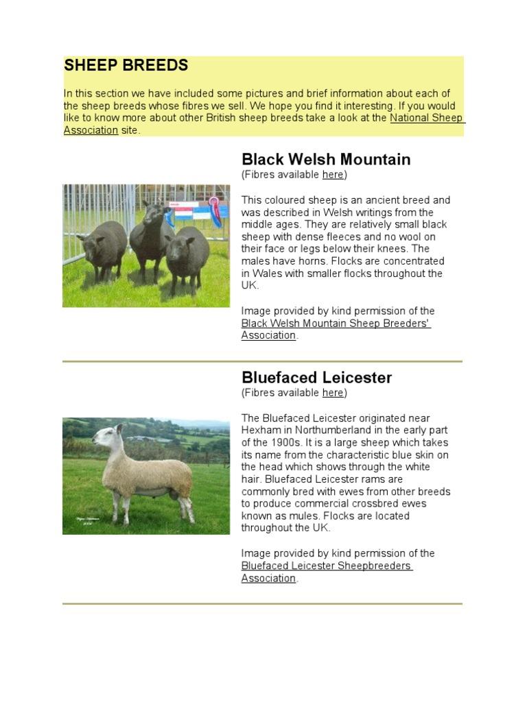 Sheep Breeds   Sheep   Wool