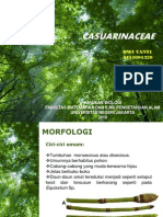 Casuarinaceae