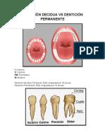 Dentición Decidua vs Dentición Permanente