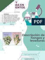 HONGOS Y LEVADURAS EN ALIMENTOS.pdf