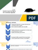 FILOGENIA MOLECULAR DE UN NUEVO HANTAVIRUS EN Urotrichus