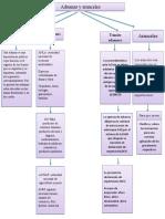 mapa conceptual aduana y aranceles