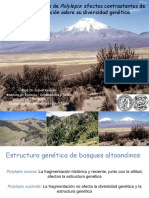Bosques altoandinos de Polylepis_ efectos contrastantes