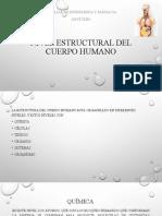 NIVEL ESTRUCTURAL DEL CUERPO HUMANO - copia