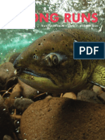 Summer 2020 Strong Runs Newsletter Native Fish Society