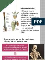 2 GENERALIDADES DEL ESQUELETO HUMANO, COLUMNA VERTEBRAL Y CAJA TORÁCICA.pptx