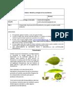 Guía N8 I medios fotsintesis .docx