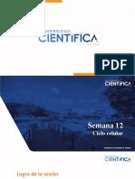 SEMANA 13 _ CICLO CELULAR.pptx